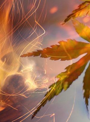 Chemin de feux vers l'hiver <br/>Samedi 24 octobre 2020